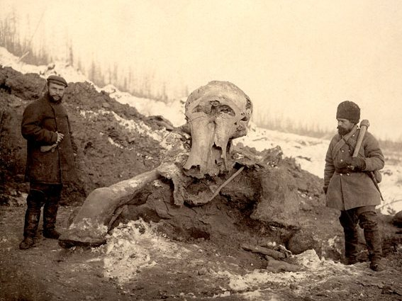 Берёзовский мамонт